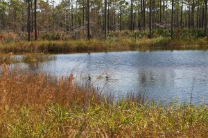 A small lake in Jonathan Dickinson State Park