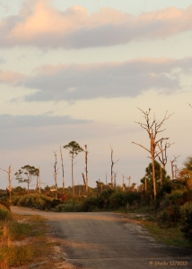 One of our Evening Walking Paths.