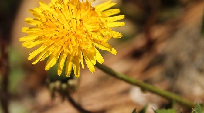~Poetry/Birds: Spring elevates