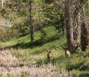 ~ Nice to see some deer ~ We were being watched. Usually we see Elk in this area.