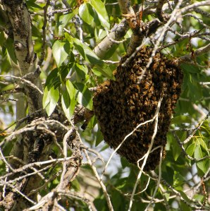 ~ A Buzzing Beehive ~ I did not want to get too close!