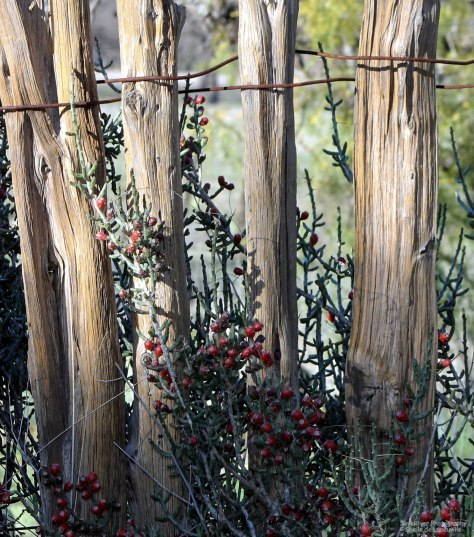 An Old Picket Fence (taken at South Llano State Park)