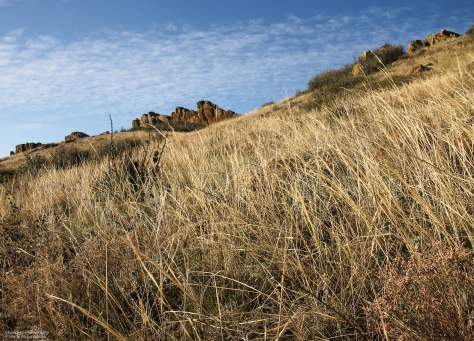 Fields of Grasses