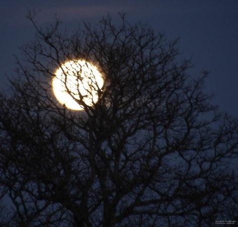 """We will Waltz across the Moon"""