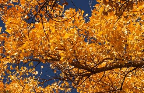 Whoa, beautiful fall colors