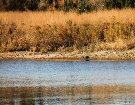 Fall colors and a Great Blue Heron