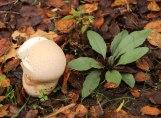 Mushrooms on the Forest Floor