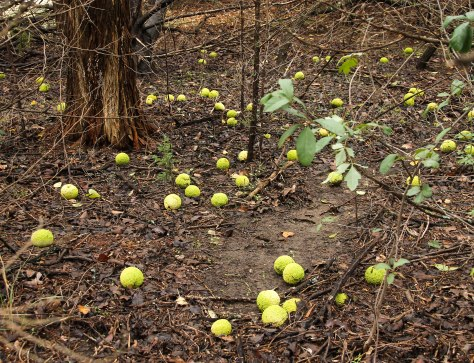 Tennis Bals on the forest floor.