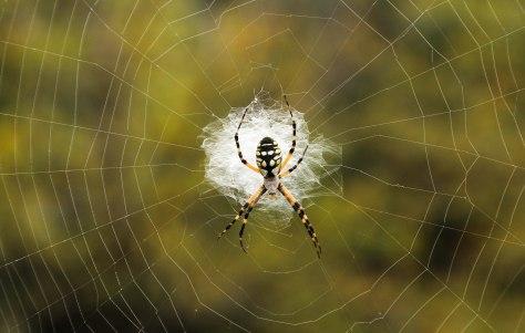A Tangled Web she Weaves
