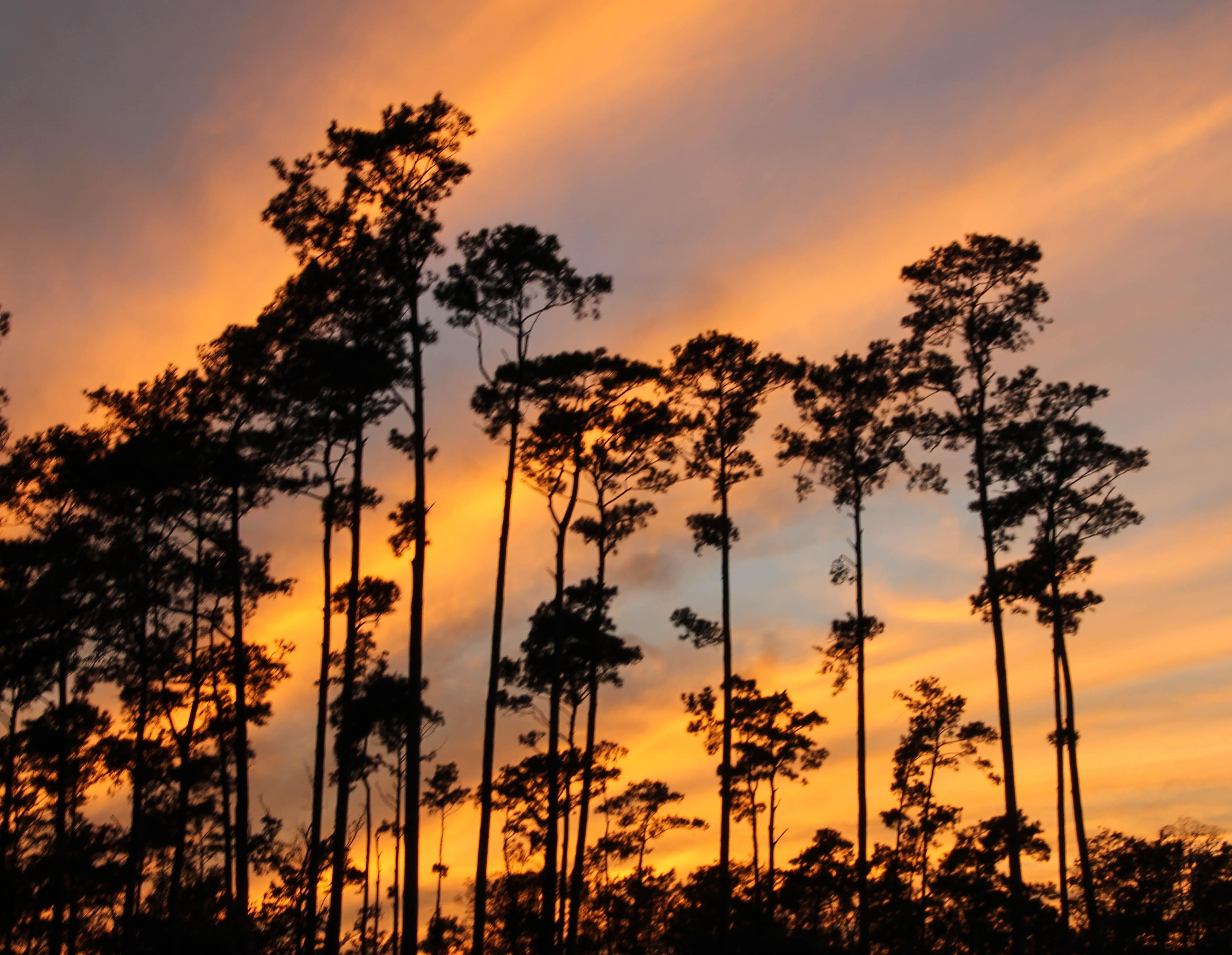Louisiana & Fairview Riverside State Park~ | Wolf Song Blog