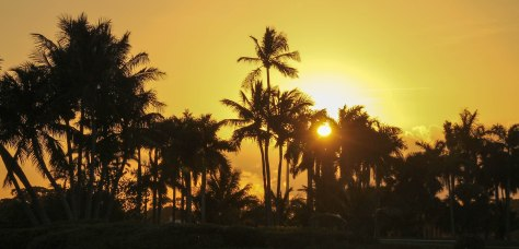 Palm Trees and the Setting Sun