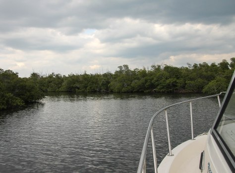 View of the Mangroves that grow along the waterways. Penalty of law to disturb these plants!