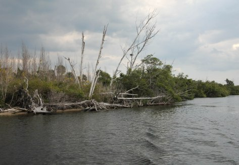 Typical view of an Osprey nest along the shoreline.