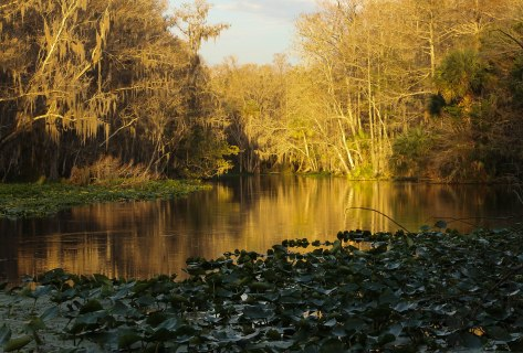 Near Sunset at Silver Springs State Park, along the bank of the Silver River