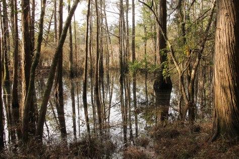 A Bog along a trail