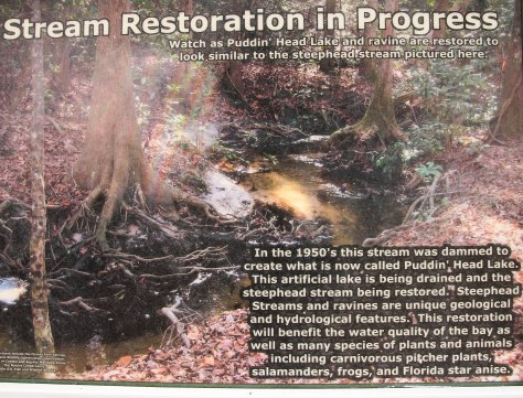 Stream Restoration A habitat once destroyed is coming back to life!