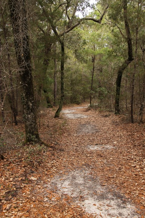 A hiking path at Rocky Bayou State Park
