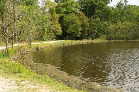 Evangeline Pond