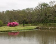 Beautiful Azaleas and lagoons are everywhere