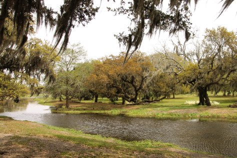Live Oaks and Lazy Lagoons