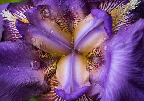 Inside of an Iris