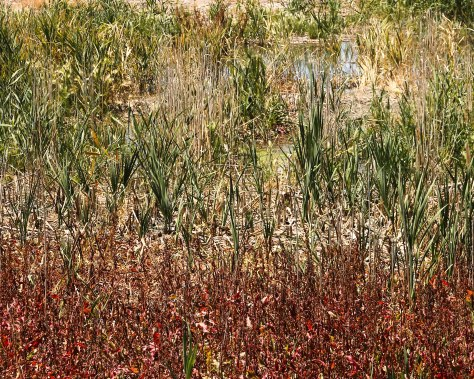 Colors of a Summer Marsh