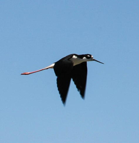 Close-up in flight
