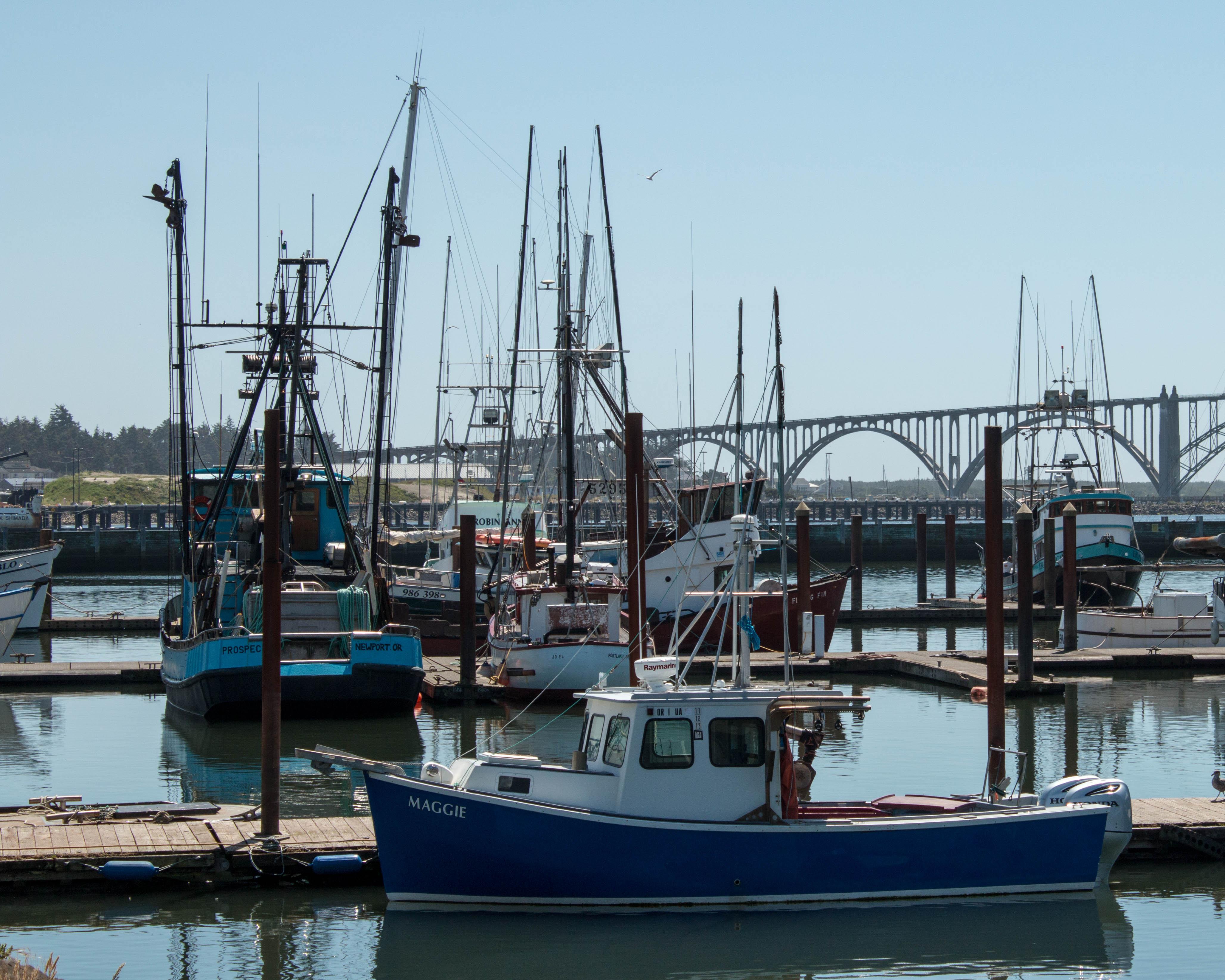 Bayfront wolf song blog for Newport oregon fishing
