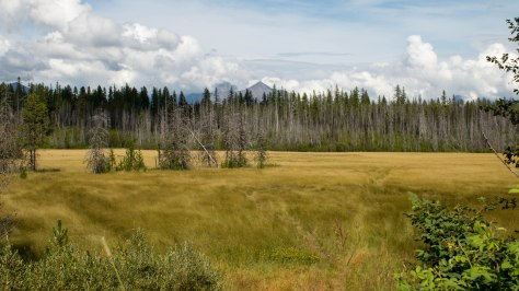 Not far from Fish Creek Campground. Photo taken from the west side of McDonald Lake looking east.