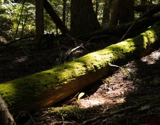 Moss covered fallen tree
