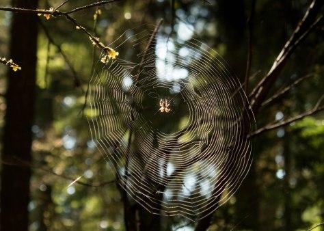 A Spiker's Web we Weave