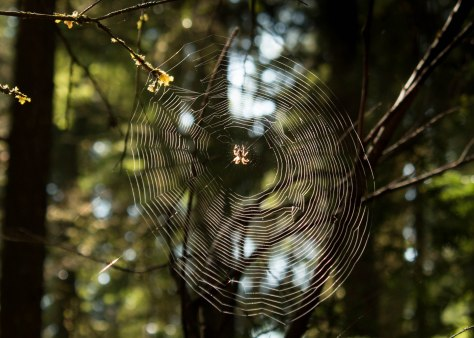 A Spiker's Web we Weave