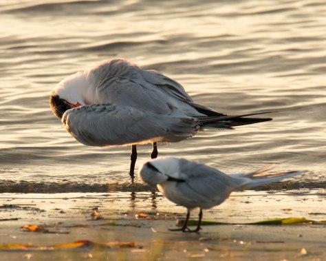 Tern Yoga