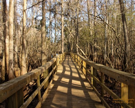 A pier leading to the Suwannee River