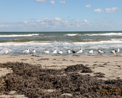 Hobe  Sound, Florida Beach