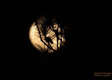 Full Moon over Mobile Bay