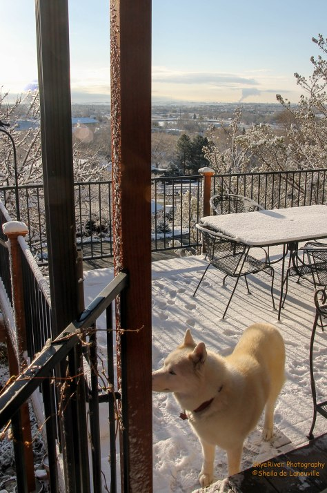 The Explorer enjoying her snow covered deck. Photo taken looking east toward Loveland.