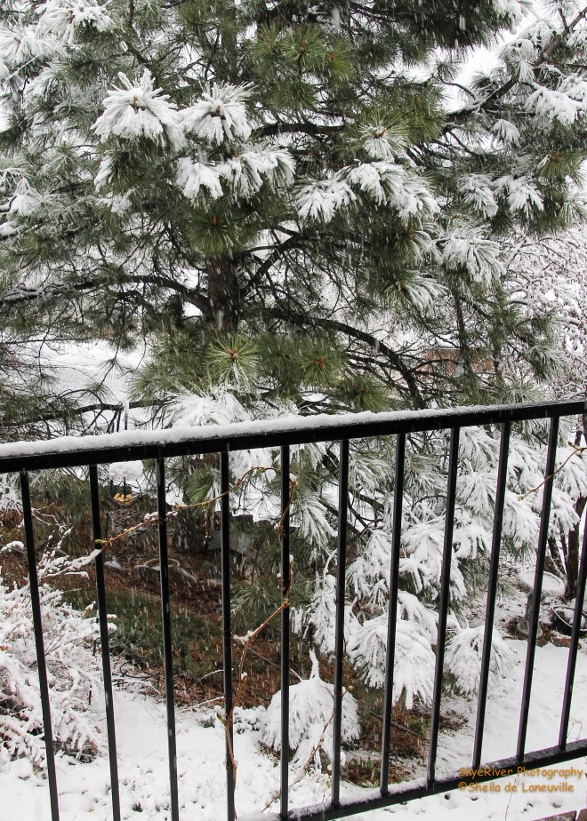 Looking down into our front yard from the deck.