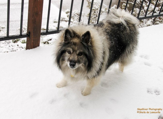 ~Look Mom its snowing