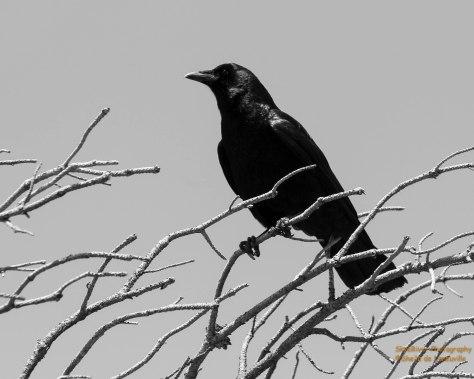 Black & White Photo Challenge #3