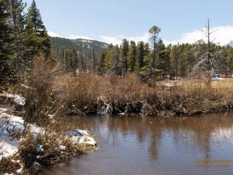 An old Beaver Dam