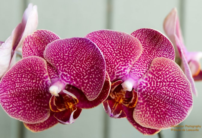 ~Orchids, my new Hobby