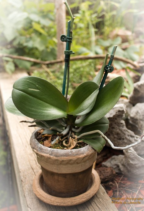My Florida Orchid