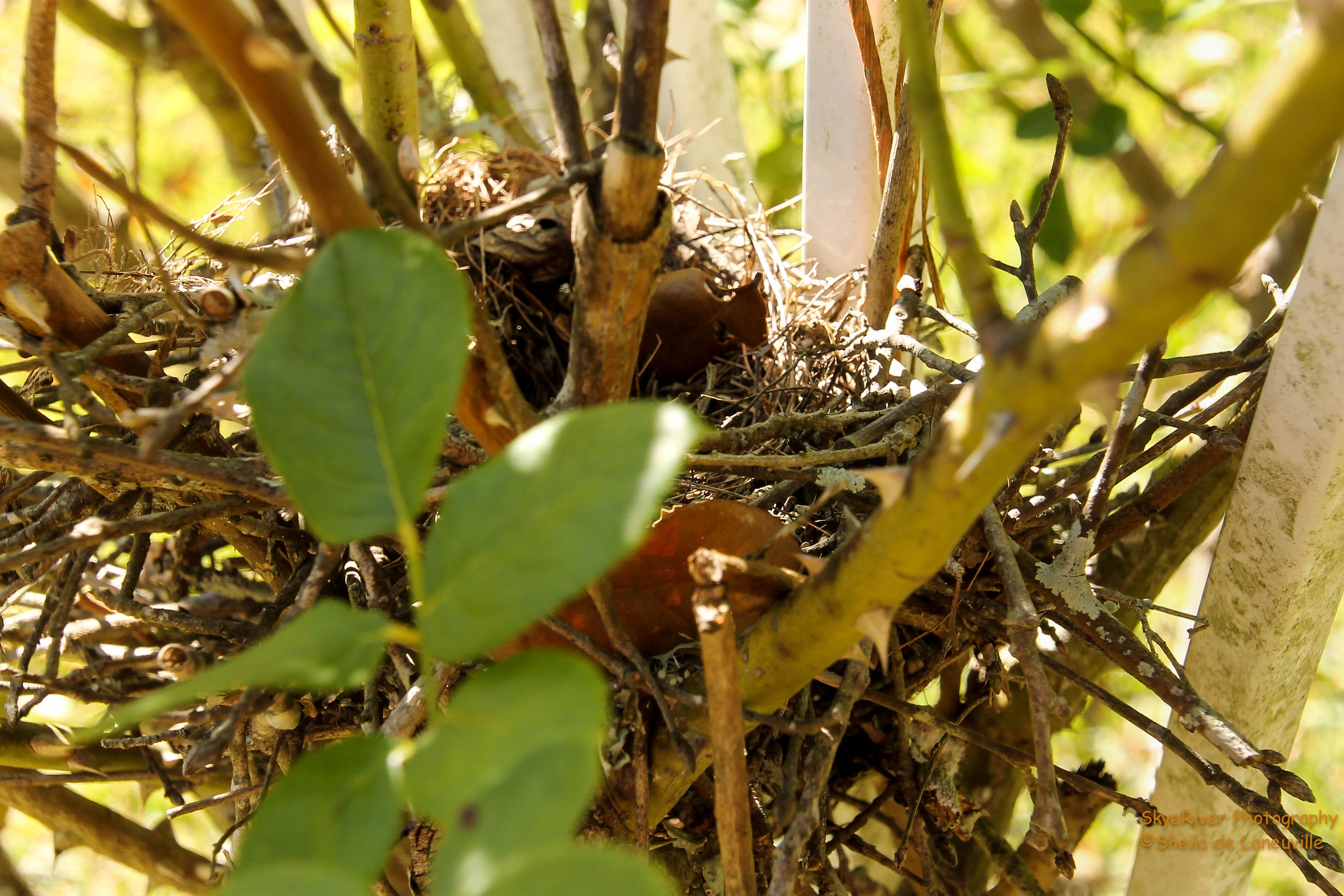 An old bird nest