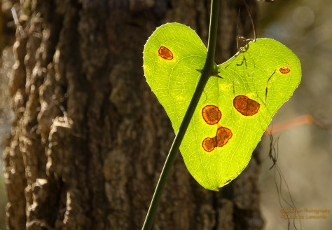 Nature has a heart.