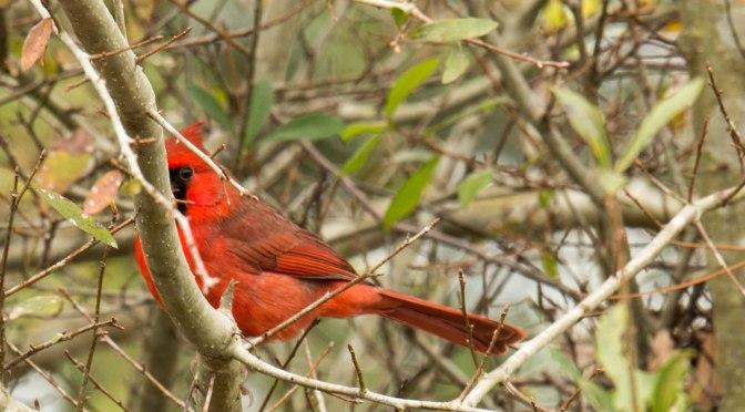 ~Birding in Myakka River State Park