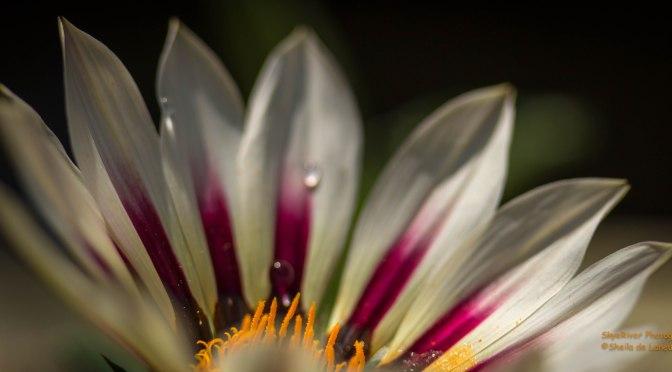 ~Macro Monday – Flowers