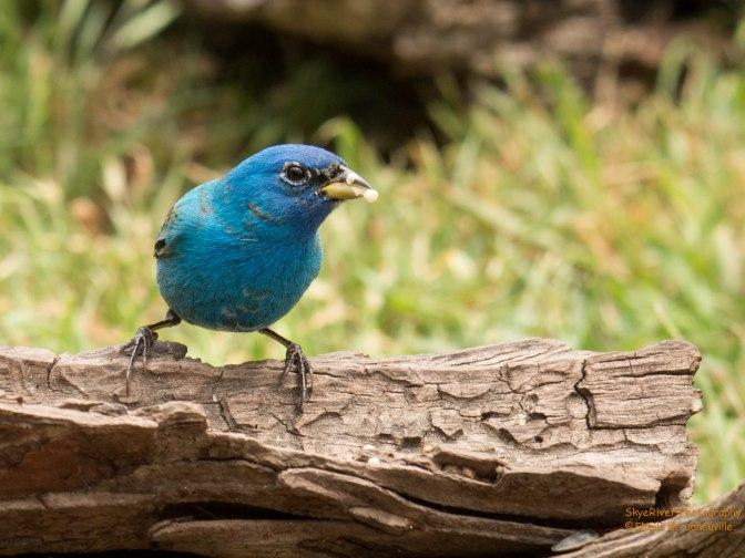 ~Spring birding in Texas-