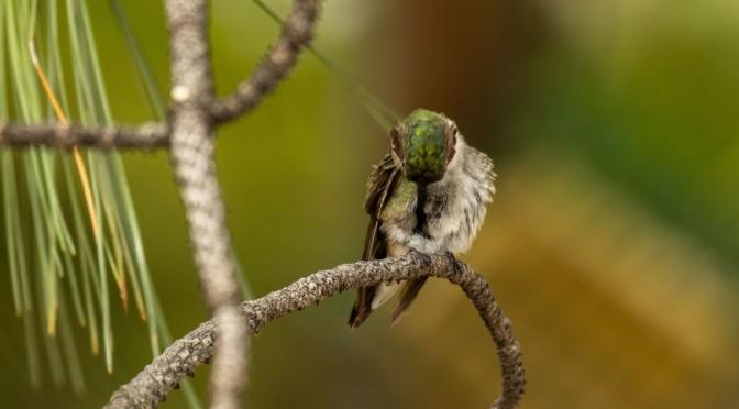 ~Hummingbirds
